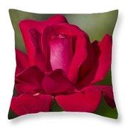 Rose Flower Series 2 Throw Pillow