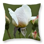 Rose Flower Series 5 Throw Pillow