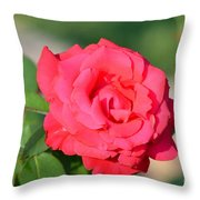 Rose In The Morninglight Throw Pillow