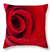 Rose Macro Wet 1 C Throw Pillow
