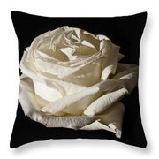 Rose Silver Anniversary Throw Pillow