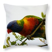 Rosella Splendour  Throw Pillow