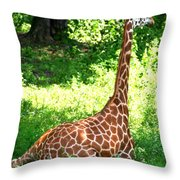 Rothschild Giraffe Throw Pillow