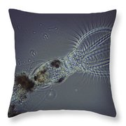 Rotifer Stephanoceras Throw Pillow
