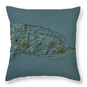 Rotifera Kellicottia Throw Pillow