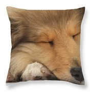 Rough Collie Pup Throw Pillow