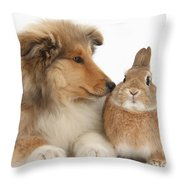 Rough Collie Pup With Rabbit Throw Pillow