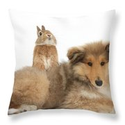 Rough Collie Pup With Sandy Netherland Throw Pillow