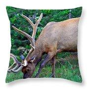Royal Bull Elk Throw Pillow