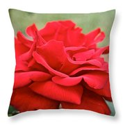 Royal Red Rose Throw Pillow