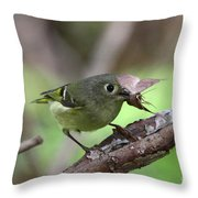 Ruby-crowned Kinglet Nabs A Moth Throw Pillow