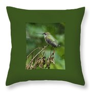 Ruby On The Perch Throw Pillow
