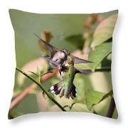 Ruby-throated Hummingbird - An Altercation Throw Pillow
