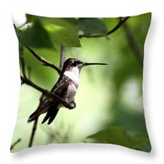 Ruby-throated Hummingbird - Shade Throw Pillow