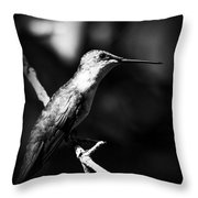 Ruby-throated Hummingbird - Signature Throw Pillow