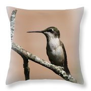 Ruby-throated Hummingbird - Totally Innocent Throw Pillow