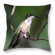 Ruby-throated Hummingbird - Hanging Low Throw Pillow
