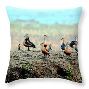 Ruddy Shelducks Throw Pillow