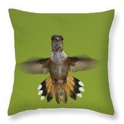 Rufous Hummingbird Selasphorus Rufus Throw Pillow
