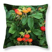Rugosa Rose With Rose Hips Throw Pillow