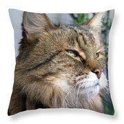 Runcius- My King Kitty Enjoying The Sunshine Throw Pillow