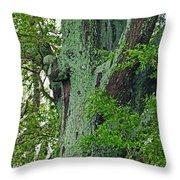 Rural Trees Close Up Throw Pillow