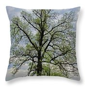 Rural Trees I Throw Pillow