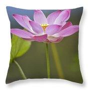 Sacred Lotus Nelumbo Nucifera Flower Throw Pillow