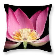 Sacred Lotus Nelumbo Nucifera Throw Pillow