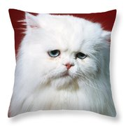 Sad Persian Cat Throw Pillow