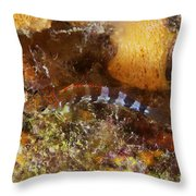Saddled Blenny, Bonaire, Caribbean Throw Pillow