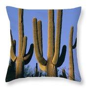 Saguaro Cacti In Desert Landscape Throw Pillow
