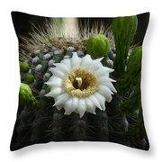 Saguaro Cactus Blooms  Throw Pillow
