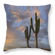 Saguaro Carnegiea Gigantea Cacti, Cabo Throw Pillow