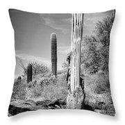 Saguaro Skeleton Bw Throw Pillow