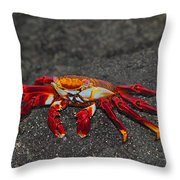 Sally Lightfoot Crab Throw Pillow by Tony Beck
