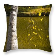 Salmon During The Fall Migration In The Little Manistee River In Michigan No. 0887 Throw Pillow