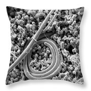 Salmonella Enteritidis Throw Pillow