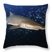 Sand Tiger Shark Off The Coast Of North Throw Pillow