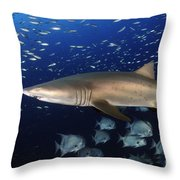 Sand Tiger Shark Swimming In Blue Water Throw Pillow