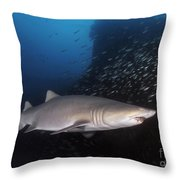 Sand Tiger Shark Swims By The Wreck Throw Pillow