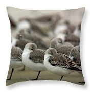 Sanderlings Try To Keep Warm At Corporation Beach In Dennis On C Throw Pillow