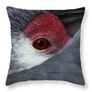 Sandhill Crane At Rest Throw Pillow