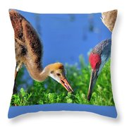 Sandhill Cranes Having Breakfast Throw Pillow