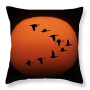 Sandhill Cranes Silhouetted Throw Pillow
