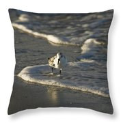 Sandpiper On Beach Throw Pillow