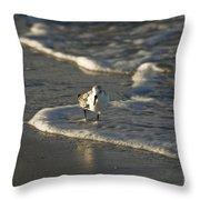 Sandpiper On Beach Throw Pillow