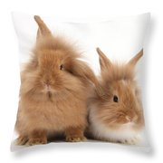 Sandy Lionhead Rabbits Throw Pillow