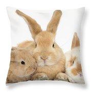 Sandy Rabbit And Babies Throw Pillow