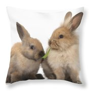 Sandy Rabbits Sharing Grass Throw Pillow
